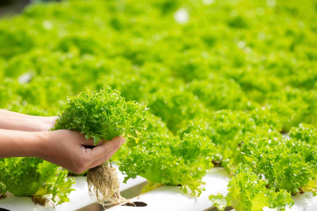 hydroponics-system-planting-vegetables-herbs-without-using-soil-health (1)-min